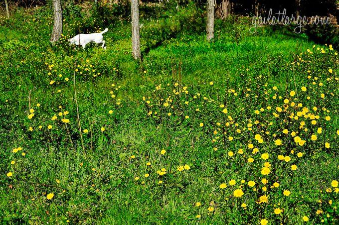 Portugal in spring (8)