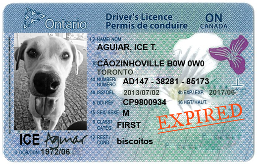 drivers license expired grace period ontario